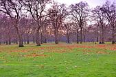 英國 白金漢宮 公園:DSC_0221_調整大小.JPG