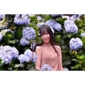繡球花ˊ習拍:相簿封面