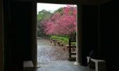 陽明山 後山公園 櫻花:DSC_0014.jpg