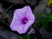 友柏農場-動植物:DSC06387.JPG
