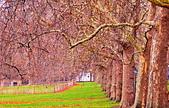 英國 白金漢宮 公園:DSC_0082_調整大小.JPG