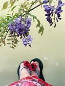 清明紫藤: