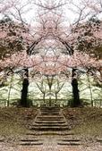 弘前公園 櫻花祭 花見:0EA7F854-3399-4719-9390-936247B2A71B_調整大小.jpg
