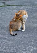 阿公家的  貓咪: