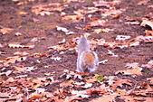 英國 白金漢宮 公園:DSC_0420_調整大小.JPG