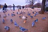 英國 白金漢宮 公園:DSC_0457_調整大小.JPG