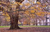 英國 白金漢宮 公園:DSC_0549_調整大小.JPG