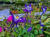 新生公園 玫瑰花:IMG_20210331_175153_調整大小.jpg