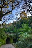 櫻你而在 陽明山公園:DSC_0269_調整大小.JPG