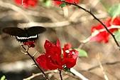 友柏農場-動植物:IMG_0482.JPG