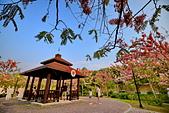 春色滿園 花旗木:DSC_0445_調整大小.JPG