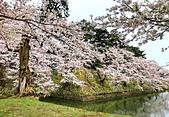 日本 平成時期的最後櫻花...2019 4月:440A1AF7-60D6-4819-923B-88221EE72139_調整大小.jpg