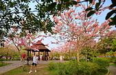 春色滿園 花旗木:DSC_0452_調整大小.JPG