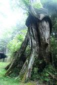 槭紅太平山:DSC_2591_調整大小.JPG