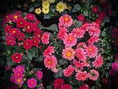 新生公園 玫瑰花:IMG_20210318_114009_調整大小.jpg
