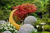 竹子湖 海芋季 大賞園:DSC_0304_調整大小.JPG