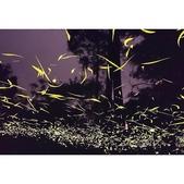 華梵大學 螢火蟲之夜:相簿封面