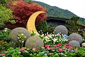 竹子湖 海芋季 大賞園:DSC_0308_調整大小.JPG