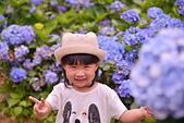繡球花ˊ習拍:DSC_0247_調整大小.JPG
