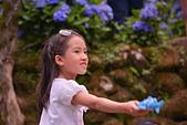 繡球花ˊ習拍:DSC_0259_調整大小.JPG
