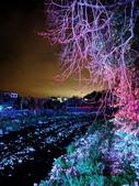 石岡 花漾藝術燈會:IMG_20210212_203357_調整大小.jpg