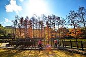 湖岸落羽松 原住民文化主題公園:DSC_0253_調整大小.JPG