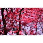 槭紅:相簿封面