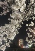 弘前公園 櫻花祭 花見:2B68DAB4-6588-4524-BC67-D8B760000AE3_調整大小.jpg