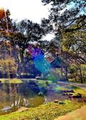 櫻你而在 陽明山公園:DSC_0358_調整大小.JPG