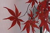 太平山11-5-98:IMG_0639.JPG