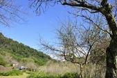 棲蘭森林遊-1:_DSC0381.JPG
