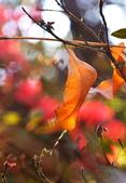 櫻你而在 陽明山公園:DSC_0371_調整大小.JPG