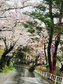 日本 平成時期的最後櫻花...2019:217222FA-BE14-4FE5-B575-517FA7BCBB3B_調整大小.jpg