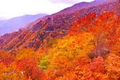 秋天的 日光:DSC_0636_調整大小.JPG