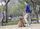 大型貴賓犬:DSC_8717_調整大小.JPG