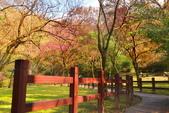 櫻你而在 陽明山公園:DSC_0412_調整大小.JPG