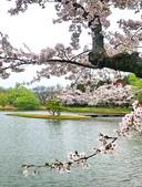 弘前公園 櫻花祭 花見:4AE18998-46DzC-4B81-9D4B-ECC9F4CCACE3_調整大小.jpg