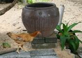 暑假遊越南-3:IMG_1782.JPG