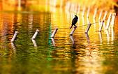 公園鴨子:DSC_0225_調整大小.JPG