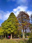 落羽杉季節:IMG_20201213_142049_調整大小.jpg