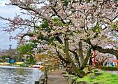 日本 平成時期的最後櫻花...2019 4月:373D5C72-F72D-4E2A-A8BD-C49E607EA811_調整大小.jpg