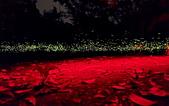 華梵大學 螢火蟲之夜:Firefly_210427_14_調整大小.jpg