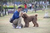 大型貴賓犬:DSC_8751_調整大小.JPG