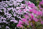台大杜鵑花節2021:DSC_0026_調整大小.JPG