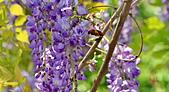 粗坑窯 紫藤:DSC_9535_調整大小.JPG