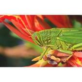 花蟲習拍:相簿封面