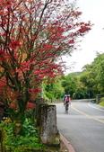 陽金公路的 紅槭:DSC_0104_調整大小.JPG