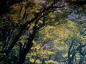 太平山11-5-98:DSC05135.JPG