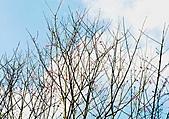 風景-平湖12-18:DSC_0365.JPG