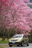 50農場櫻花 :20210302 武陵農埸_210311_15_調整大小.jpg